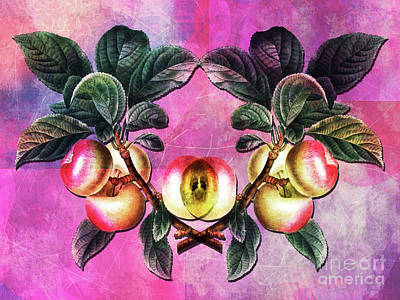 The Hills Mixed Media - Apple Time Again by Tammera Malicki-Wong