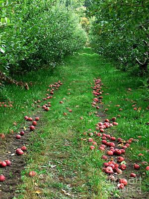 Photograph - Apple Tracks Photograph by Kristen Fox