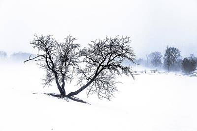 Photograph - Apple Tree And Winter Fog by Tim Kirchoff