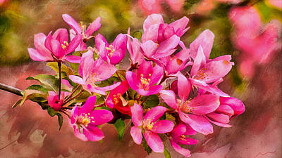 Cafeart Digital Art - Apple Tree Blossom by Jean-Marc Lacombe