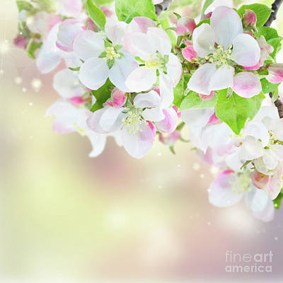 Photograph - Apple Tree Blossom II by Anastasy Yarmolovich