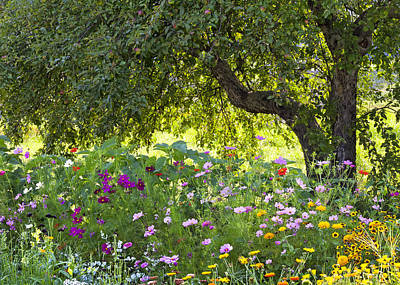 Photograph - Apple Tree Border Garden by Alan L Graham