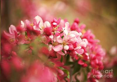 Painting - Apple Tree Flowers In Spring by AmaS Art