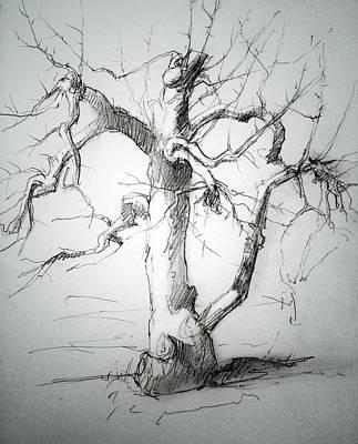 Apple Tree Print by H James Hoff