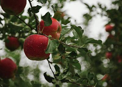 Photograph - Apple Tree by Hyuntae Kim