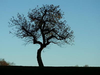 Photograph - Apple Tree In November by Ernst Dittmar