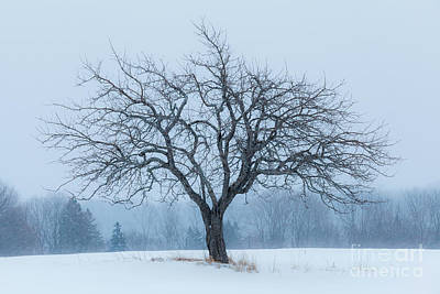 Photograph - Apple Tree In Snowfall by Alan L Graham