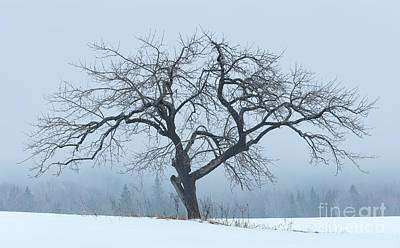 Photograph - Apple Tree In Winter Fog by Alan L Graham