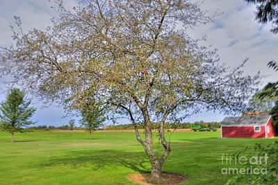 Apple Tree Art Print by Kathleen Struckle