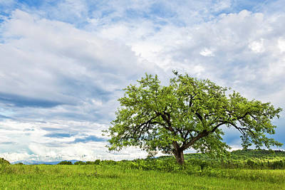 Photograph - Apple Tree Landscape by Alan L Graham