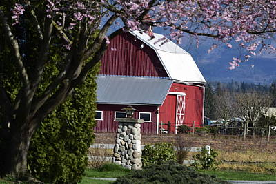 Photograph - Apple Tree Pink And Barn Red by Tom Cochran