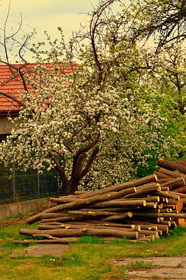 Photograph - Apple-tree-spring by Henryk Gorecki