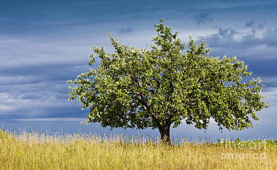 Photograph - Apple Tree Summer Landscape by Alan L Graham