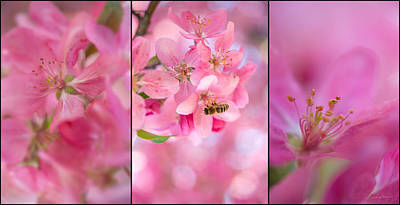 Three Trees Photograph - Apple Tree Triptych 3 by Leland D Howard