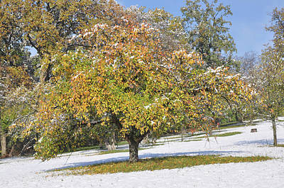 Photograph - Apple Tree With Autumn Leaves Snow Covered Meadow by Martin Stankewitz