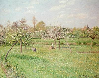 Midi Painting - Apple Trees At Gragny by Camille Pissarro