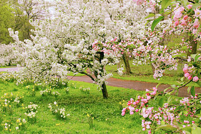 Apple Trees In Bloom Art Print by Jessica Jenney