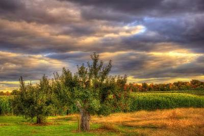 Apple Trees On A Farm In Autumn Art Print by Joann Vitali