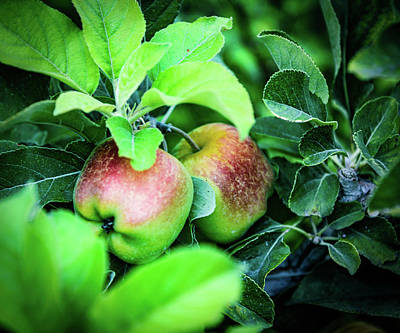Apple Photograph - Apples  by Camille Lopez
