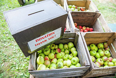 Photograph - Apples For Sale by David Arment