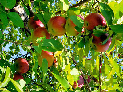 Yield Painting - Apples Hanging From A Tree Branch 9 by Lanjee Chee