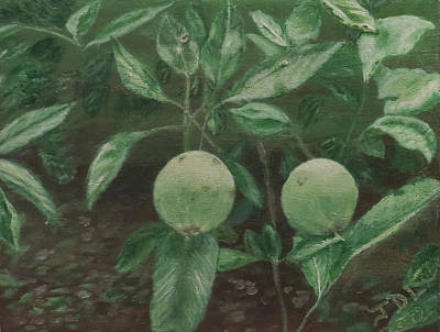 Jodi Diliberto Paintings - Apples by Jodi DiLiberto