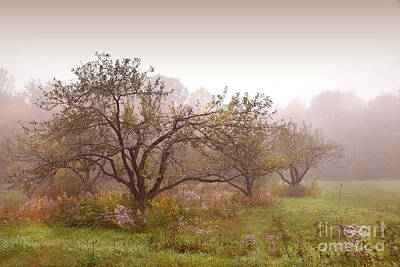 Clouds Over Pasture Photograph - Apples Trees In The Mist by Sandra Cunningham