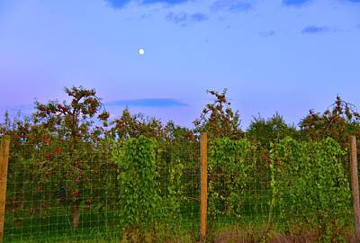 Photograph - Apples Under The Moon by Tracy Rice Frame Of Mind
