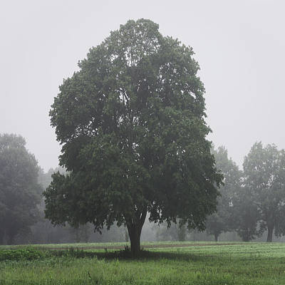 Appleton Photograph - Appleton Tree Rainy Day by David Stone