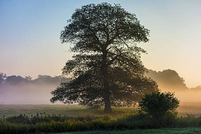 Appleton Tree With Morning Fog Art Print by David Stone