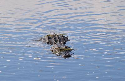 Photograph - Approaching Gator by Warren Thompson
