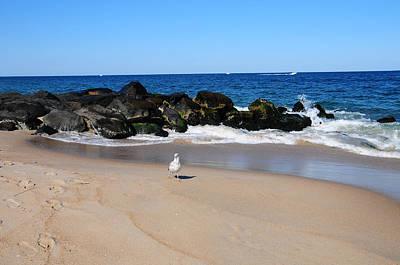 Approaching Seagull Art Print by JoAnn Lense