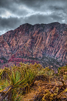 Photograph - Approaching The Red Rocks by David Patterson