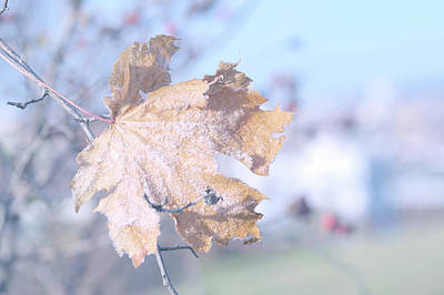 Photograph - Approaching Winter by Jenny Rainbow