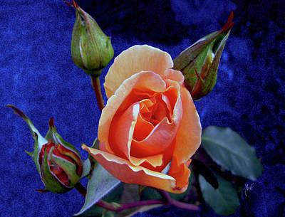 Photograph - Apricot Rose by Michele Avanti