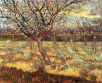 Modern Painting - Apricot Trees In Blossom by Vincent van Gogh