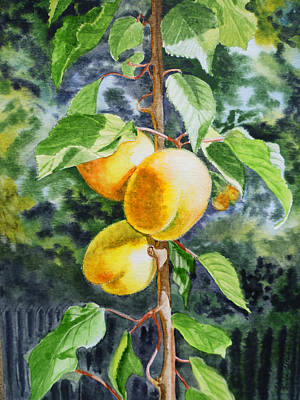 Light Yellow Painting - Apricots In The Garden by Irina Sztukowski