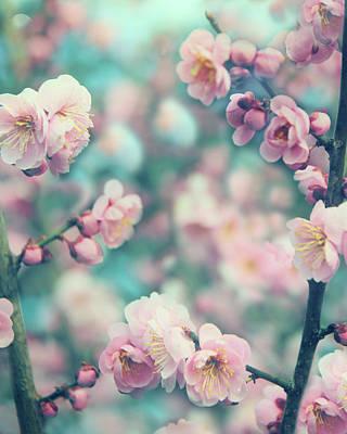 Photograph - April Apricot by Jessica Jenney
