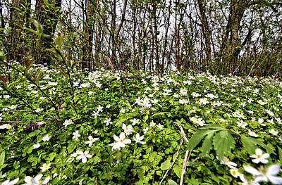 Photograph - April Blossoms by Bonfire Photography