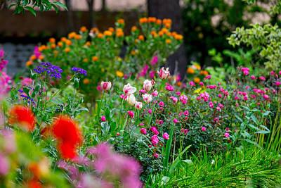 Photograph - April Flowers by Derek Dean