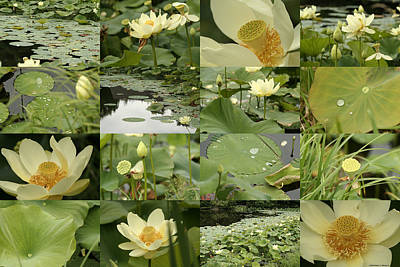 April Lotus Pond Art Print by Robert Glover