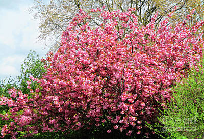 Photograph - April Pink 1 by Randall Weidner