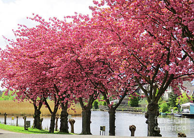 Photograph - April Pink 2 by Randall Weidner