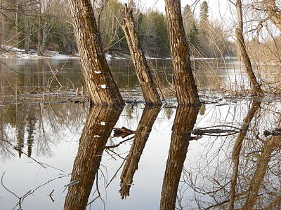 Photograph - April Reflection Of Surrounded Trees by Kent Lorentzen
