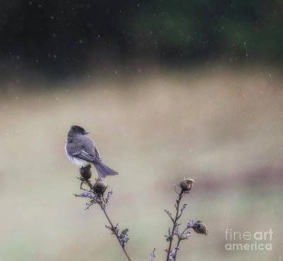 Photograph - April Showers  by Elizabeth Winter