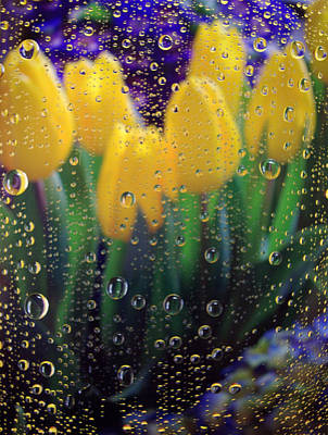 Flower In Rain Wall Art - Photograph - April Showers by Linda Mishler