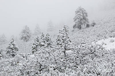 Steven Krull Royalty-Free and Rights-Managed Images - April Snowstorm in the Pike National Forest of Colorado by Steven Krull