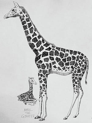 Drawing - April The Giraffe by Larry Whitler
