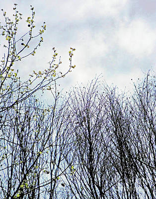 Photograph - April Trees by Lizi Beard-Ward