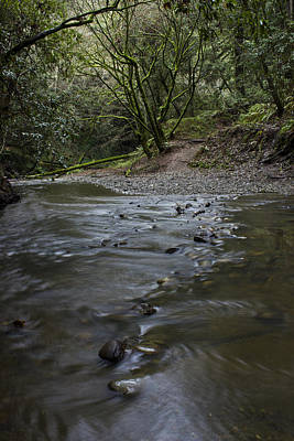 Photograph - Aptos Creek -- Nisene Marks State Park by Morgan Wright